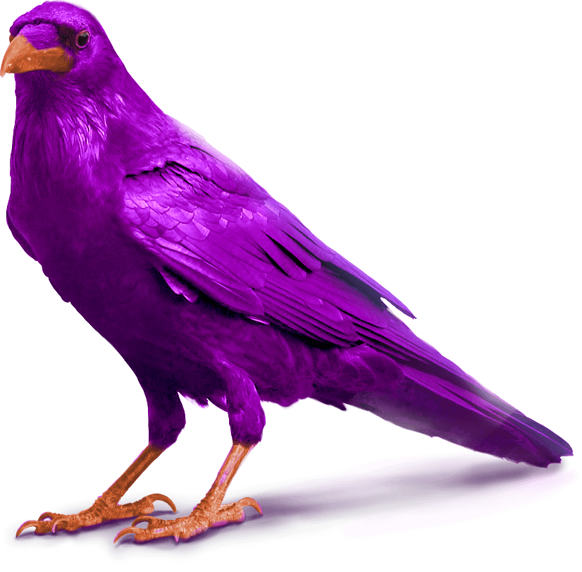 purple raven bird image standing for slider