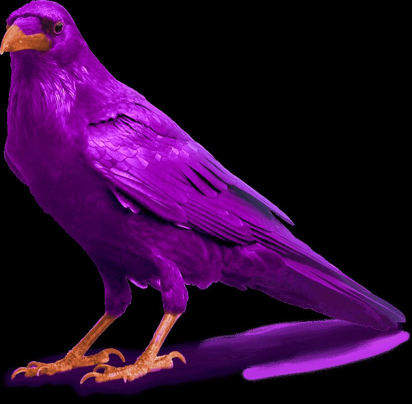 purple raven bird image standing for slider